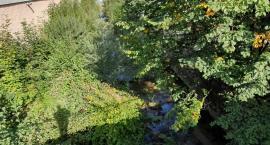 Rzeki zarastają krzakami i drzewami - Dlaczego nikt nic z tym nie robi?
