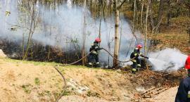 Pożar ściółki leśnej w okolicy ulicy Kruszwickiej