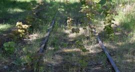 Studium wykonalności dla nieczynnych linii kolejowych