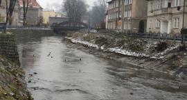Sprzątają rzekę Bóbr w Kamiennej Górze