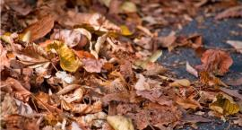 Obowiązek sprzątania liści z chodników