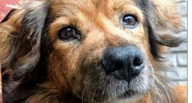 W Jeleniej Górze powstaje centrum szkoleniowo-adopcyjne dla zwierząt