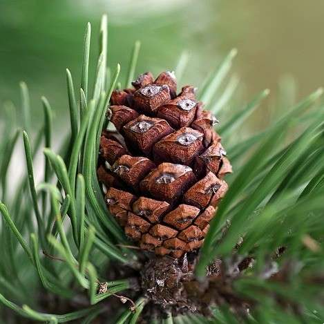 Konkursy, Konkurs leśną ozdobę świąteczną - zdjęcie, fotografia