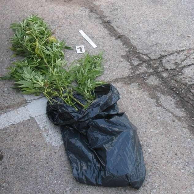 Biznes i Praca, Przewozili krzewy konopi - zdjęcie, fotografia
