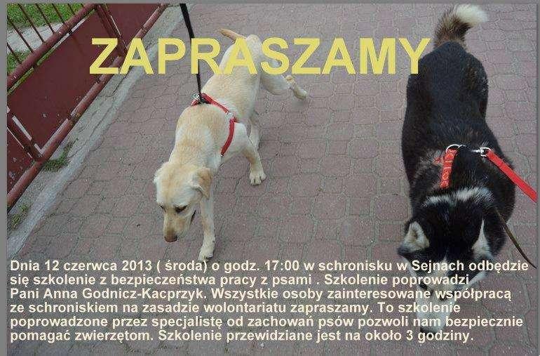 Biznes i Praca, Bezpiecznie psach - zdjęcie, fotografia