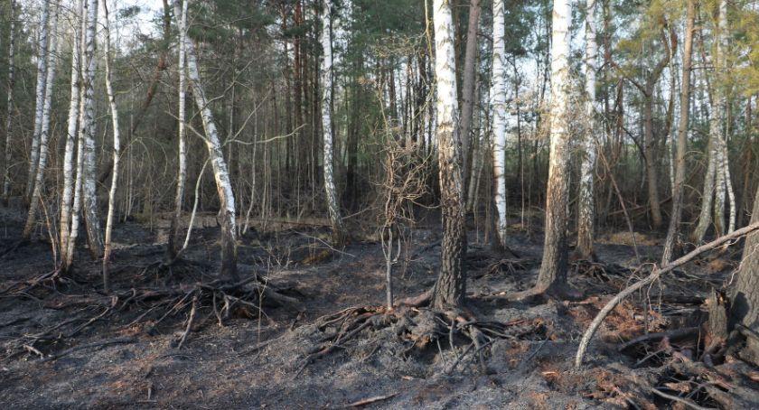 Interwencje straży i pożary, Płonął - zdjęcie, fotografia