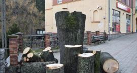 Mieszkańcy pytają : Dlaczego ścięto zdrowe drzewo ?