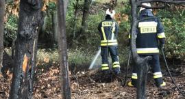 Pożar ściółki leśnej