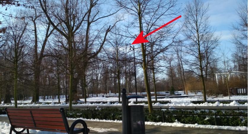 Wydarzenia, Kamery parku fuszera Wiosną będą monitorować liście - zdjęcie, fotografia