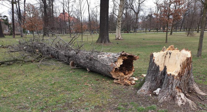 Wydarzenia, weekend mocno wiało Połamane drzewa uszkodzony - zdjęcie, fotografia