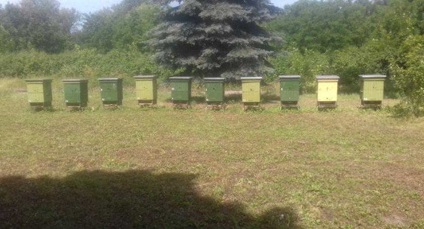 Wydarzenia, Legnica stawia pszczoły Powstała pierwsza miejska pasieka - zdjęcie, fotografia