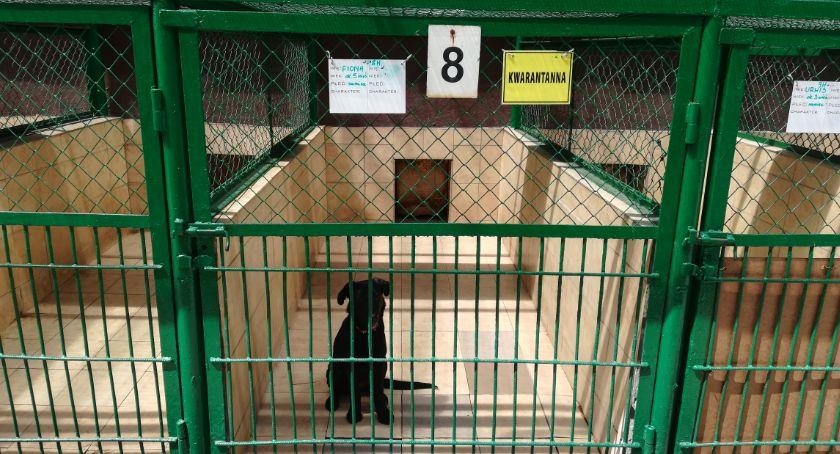 Wydarzenia, Będzie remont schroniska zwierząt Niestety tylko częściowy - zdjęcie, fotografia