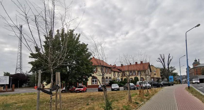 Samorząd, Wyschnięte drzewa elementem nowej ekopolityki Krzakowskiego [ZDJĘCIA] - zdjęcie, fotografia