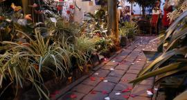 Romantycznie w legnickiej palmiarni