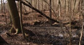 Zielony Rozwój - Bitwa pod Pątnowem Legnickim i rezerwaty