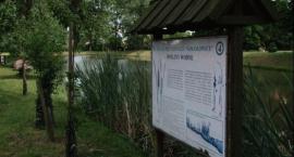 Zielony Rozwój - Gogołowice