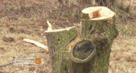 Kradli drzewo w samo południe