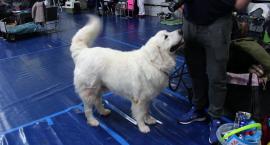 2400 psów z 16 krajów na wystawie już w weekend