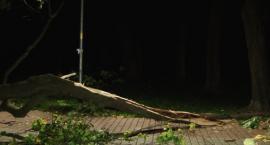 Uwaga! Służby ostrzegają przed silnymi porywami wiatru w regionie