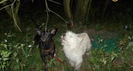 Straż miejska poszukuje ludzką bestię, która przywiązała do drzewa dwa psy