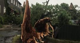 Wichura zdewastowała część miejscowości Krajów w gminie Krotoszyce
