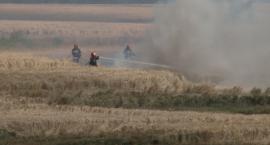 Strażacy zmagali się z pożarem zboża w podlegnickim Ulesiu [WIDEO]