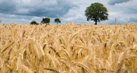 Legniccy rolnicy mogą już oszacować szkody spowodowane suszą