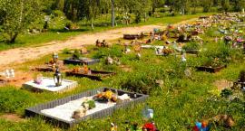 Co z cmentarzem dla zwierząt w Legnicy? Urzędnik nie wróżka