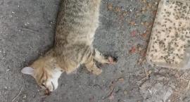 Ktoś truje koty w legnickim browarze? Są kolejne zwłoki, policja bada sprawę