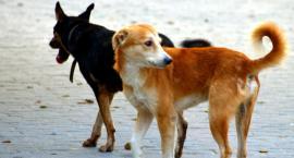 Radna pyta prezydenta. Czy straż ma obowiązek zająć się bezdomnym psem?