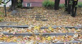 Rusza jesienna zbiórka liści. Sprawdź, kiedy przyjedzie do ciebie LPGK