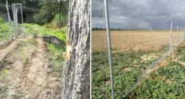 GDDKiA żali się na złodziei i rolników. Ogrodzenie A4 ma dziury