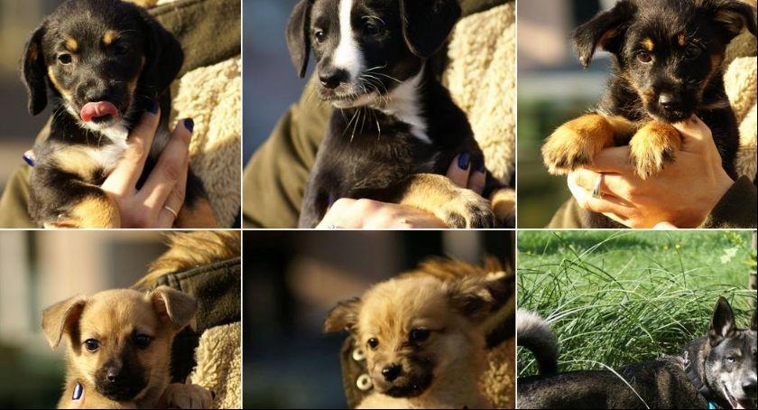 Zwierzęta, adoptować kaliskiego schroniska - zdjęcie, fotografia