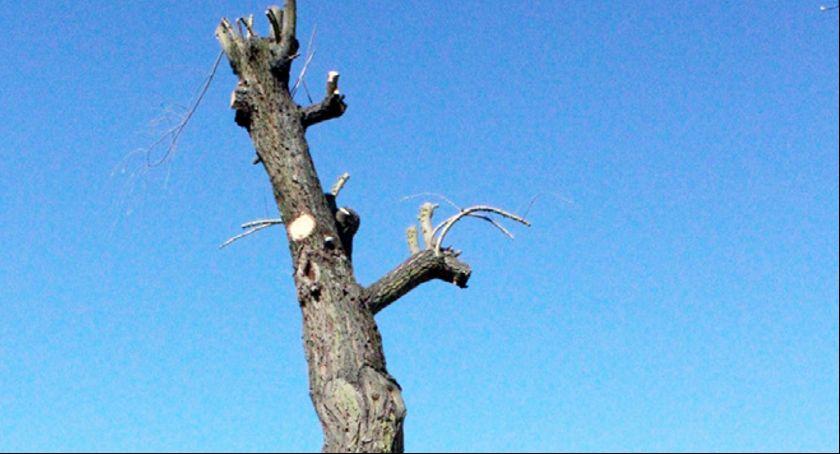 W Obiektywie Paparazziego, Trudno uwierzyć podobno drzewo Osiedle lecia - zdjęcie, fotografia