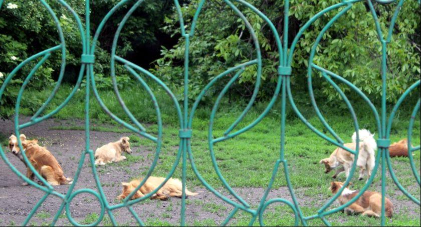 Zwierzęta, Wataha psów terroryzuje osiedle - zdjęcie, fotografia