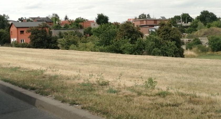 Miejski krajobraz, Kaliszu powstanie pierwsza kwietna łąka miejska - zdjęcie, fotografia