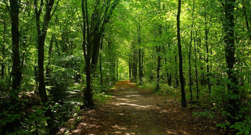 Ochrona środowiska - ekologia, opatóweckim lesie wycinają drzewa - zdjęcie, fotografia