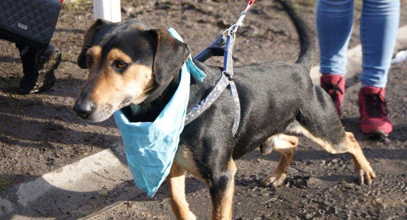 Adopcje, Maksiu - zdjęcie, fotografia