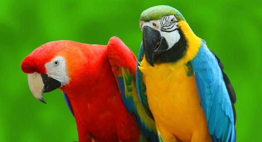Atrakcje i Ciekawostki, Wystawa ptaków egzotycznych - zdjęcie, fotografia