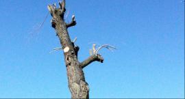 Trudno uwierzyć, ale podobno jest to... drzewo Fot. Osiedle XXV-lecia