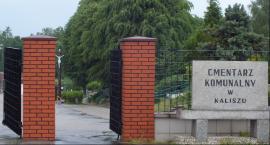 Nożowniczka spod cmentarza