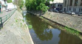 Akcja sprzątania Prosny – wyczyścić rzekę do dna!