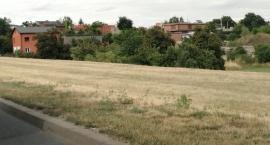 W Kaliszu powstanie pierwsza kwietna łąka miejska