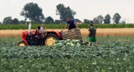 W Kaliszu zbieranie ogórków  już nie kręci młodzieży - gdzie szukać pracy na wakacje