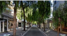 Miasto chce sadzić drzewa (ale nie zawsze może)