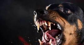 Nigdy  nie gryzą  tylko  pluszowe  psy