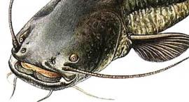 Ryby w żerowisku