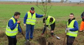 Powiat posadził 200 drzew