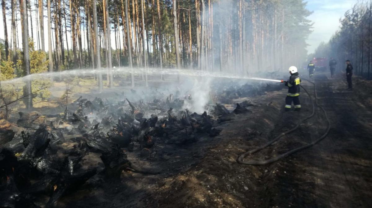 Pożar, Ogromny pożar gminie Zapaliły hałdy korzeni pozostałe trąbie powietrznej - zdjęcie, fotografia