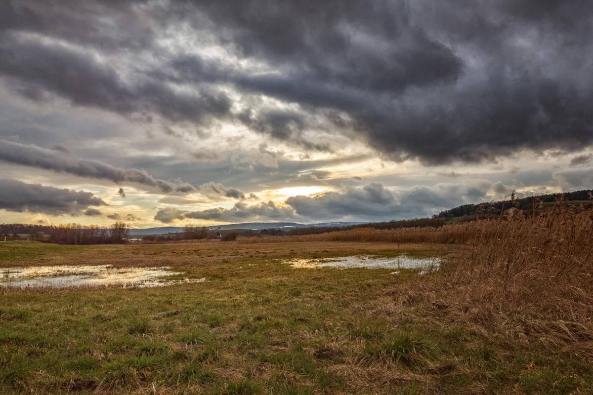"""Uprawa, """"Deszcze były ulewne zatapiały Takiego pamiętam"""" Straty wynoszą setki tysięcy złotych - zdjęcie, fotografia"""